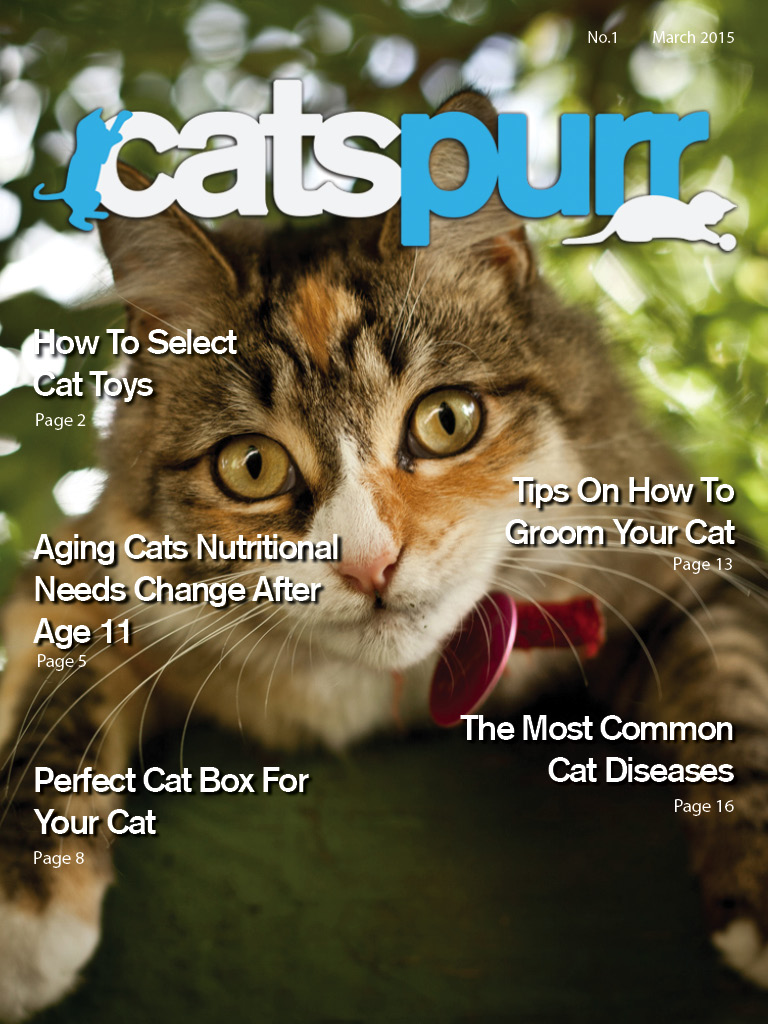 CatsPurr Magazine for Cat Lovers