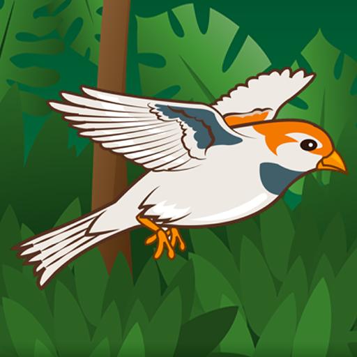 Ding Bird