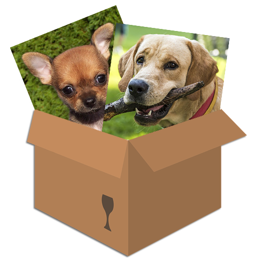 Dogs & Puppies: Puzzle Box