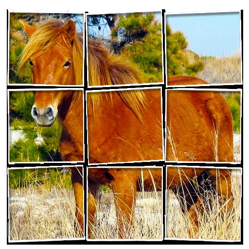 Pony Jigsaw Puzzle (FREE)