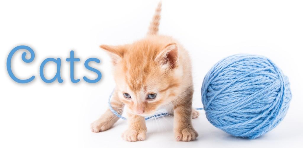 Cat Games Free