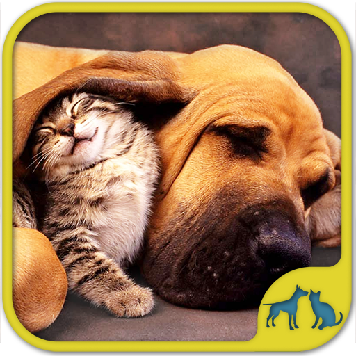 Cats And Dogs Games