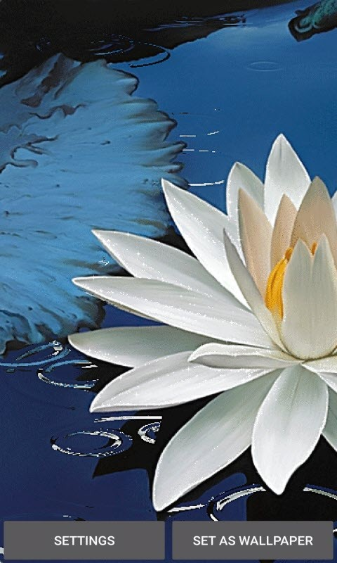 Shiny Lotus Live Wallpaper