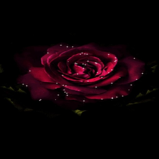 Shining Rose Blooming LWP