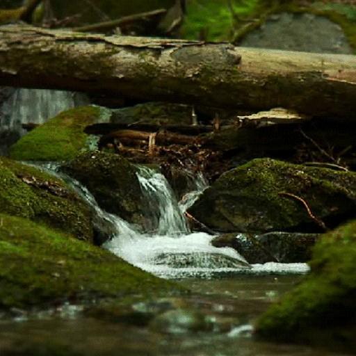 Jungle River LWP