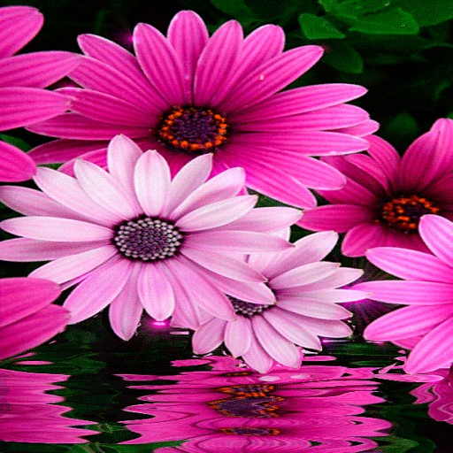 Pink White Flowers LWP