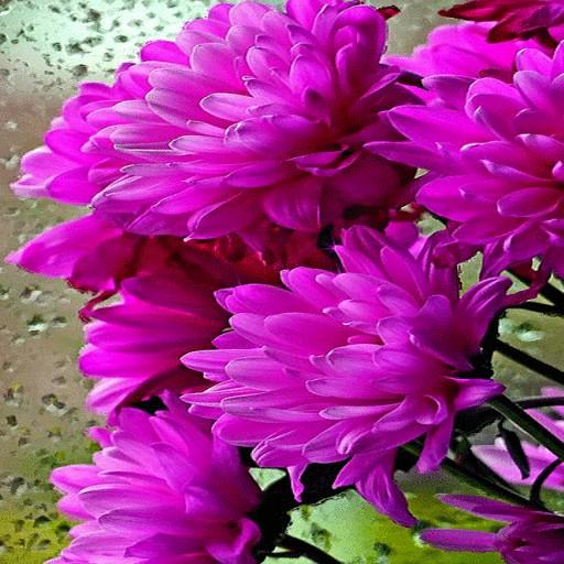 Shiny Flowers Live Wallpaper